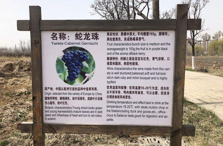 Changyu Cabernet Gernischt