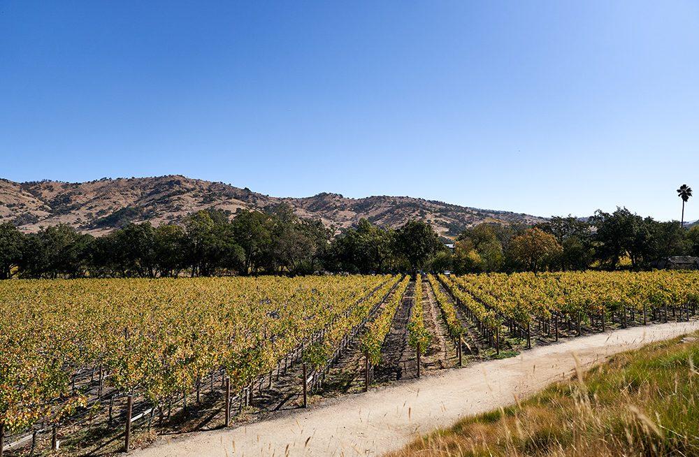 Stag's Leap Wine Cellars vineyard